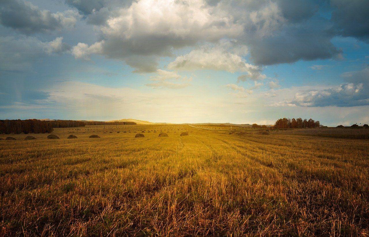 Информации о земельном участке в государственном кадастре недвижимости станет больше