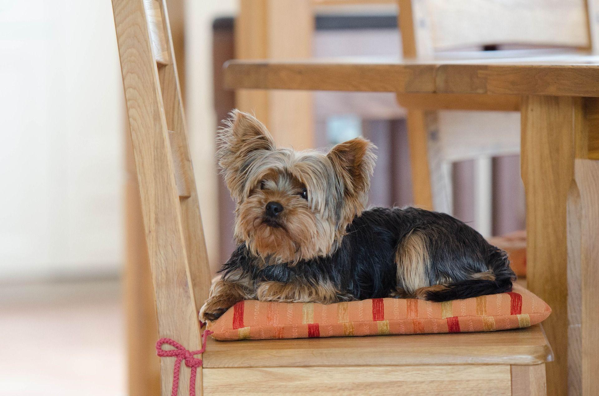 В Англии из типового договора аренды исключат запрет на содержание домашних животных