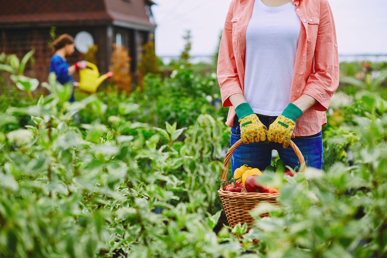 Фермеры смогут сэкономить на оплате патента