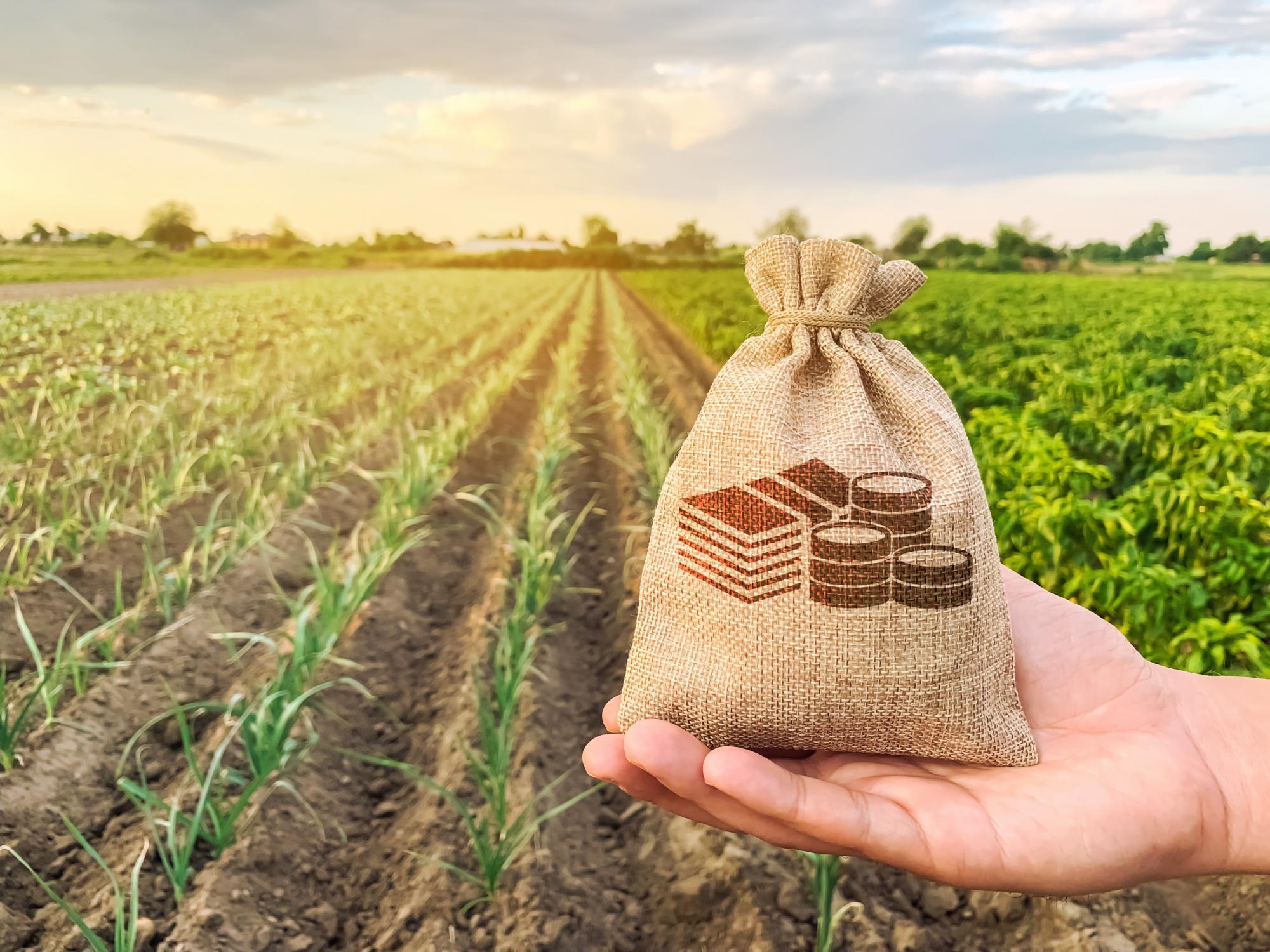 Разъяснен порядок применения измененной кадастровой стоимости земельного участка для целей налогообложения